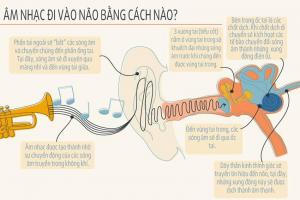 âm nhạc đi vào não bộ như thế nào?